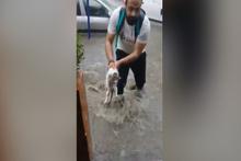 Sele kapılan kediyi kurtardı