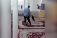 Camiye namaz esnasında keçi girerse...