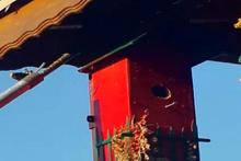 Kuş yuvasından 2 metrelik yılan çıktı
