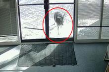 Keçi kafayı dükkânın camına takarsa