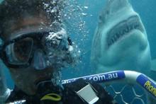 Açık Deniz: Kafes Dalışı filmi fragmanı - Sinemalarda bu hafta