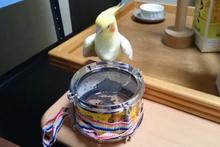 'Davulcu Papağan' görüntüsü paylaşım rekoru kırıyor!