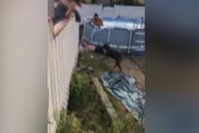 Yardımına köpeği koştu