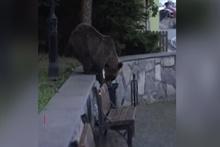 Aç kalan ayılar kasabaya indi!