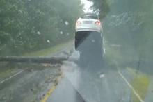Irma kasırgası'nın etkisi sürüyor! Dev ağaç cipin önüne devrildi