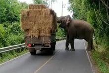 Saman kamyonunu gasp eden fil