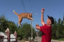 Kediler eğitilemez diyenleri utandıran kedi