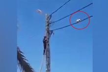 Elektrik kablosundaki akrobat kedi