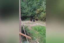 Gitmelerini rica etti, ayılar da gitti