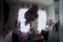 Mutfakta polise saldıran sincap