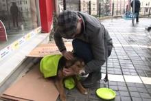 Üşüyen köpeğe şefkat eli battaniyeye sarıp süt verdiler