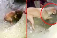 Köpek, toprak altında kalan yavrularını kurtarmayı başardı