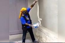 Pet şişeyle zehirli kobra yılanı yakalayan adam