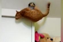 Meraklı kedinin hesap edemediği sonu