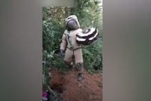 Arı kovanlarıyla yaptığı dans hayatının sonu oldu!