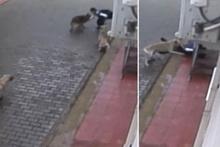 Okuldan dönen öğrenci dehşeti yaşadı! Sokak köpekleri böyle saldırdı