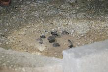 Yol kenarındaki pimi çekilmiş el bombası bulundu!