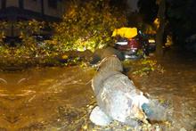 Sağanak hazırlıksız yakaladı! Ağaçlar devrildi sel bastı