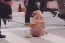 Temizlik işçisi ve sokak köpeğinin sevimli anları