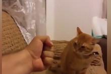 Hırçın kedi yumruğu affetmedi