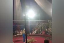 Aslan 4 yaşındaki kıza böyle saldırdı!