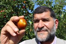 Rüyasındaki sese kulak verdi hayatı değişti Hünnap meyvesi nedir