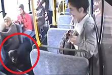 Halk otobüsüne binen doberman ortalığı karıştırdı
