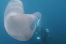 Denizde 8 metrelik gizemli dev canlı bulundu