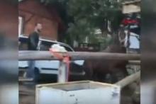 Tepki çeken görüntü! At çiftliğinde işkence görüntüsü böyle kaydedildi