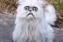 Garip bakışıyla sosyal medyayı sallayan kedi