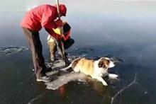 Buza yapışmış köpeği kurtardılar