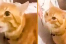 'Kindar kedi Haydar' ile sahibinin diyaloğu kahkahaya boğdu