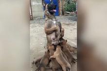 Anne köpek sıra dışı emzirme şekliyle fenomen oldu