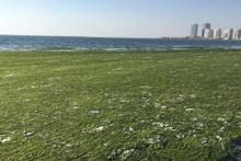 Bu görüntü vatandaşı alarma geçirdi Deniz yeşile büründü