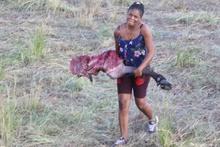 Aslanlar kovaladı insanlar yedi Onlarcası telef oldu