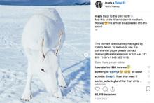 Nadir görülen beyaz Ren geyikleri fark etmek mümkün değil