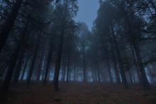 Herkes bu ormana intihar etmek için geliyor!