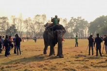 Nepal'de fil festivali: 15'incisi düzenleniyor!
