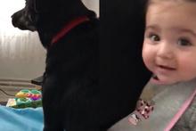 Babası tarafından azarlanan bebeği koruyan sevimli köpek