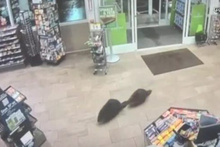 İnanılmaz! Markete girdiler, ürünlere bakıp çıktılar