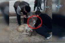 Zehirlenen köpeğe böyle müdahale ettiler
