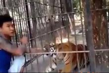 Hayvanat bahçesinde dehşet anları: Dikkatsiz ziyaretçi kolunu kaplana kaptırdı