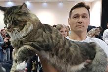 Kedilere servet teklif edildi!