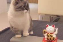 Oyuncak kediyi taklit eden sevimli kedi