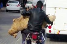 Adana'da motosikletiyle koyun taşıyan kişi, görenleri şaşırttı.