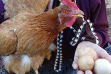 Bu yumurta bin lira