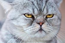 Kediler Türkiye'den Dünya'ya yayıldı