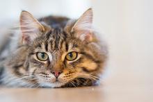 'Dünya Kediler için Anadolu'ya teşekkür etmeli'