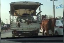 Kamyonete bağladığı atı şehir merkezinde koşturdu