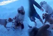 Vahşi pitbull, köpeğin önce kulağını sonra kuyruğunu koparttı!